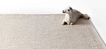 Carpet Punto
